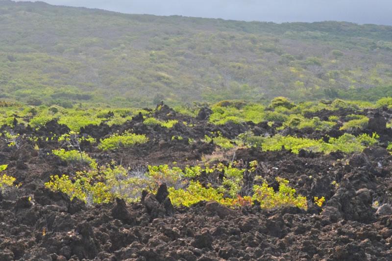ハワイ島南部の溶岩と土