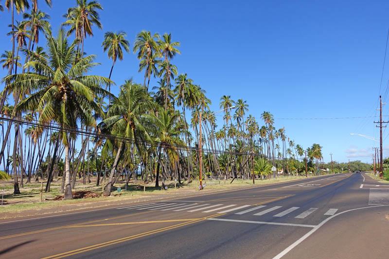 モロカイ島のココナッツグローブ周辺の様子
