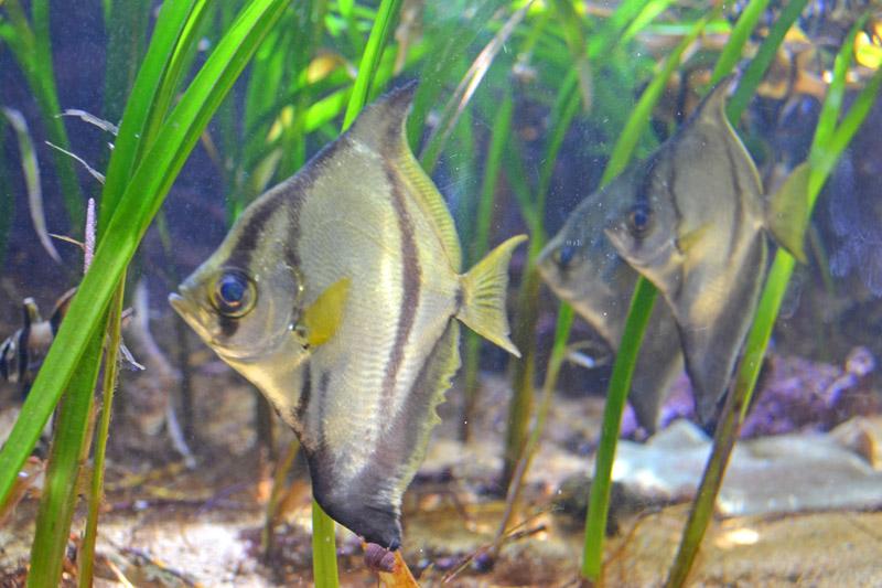 ワイキキ水族館のアクアリウム